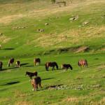 idyllische Pferde Weide