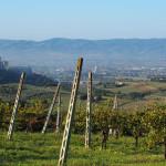 Blick zurück auf Assisi und die Basilika Santa Maria degli Angeli