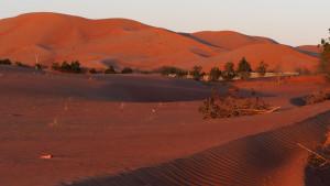 Morgenstimmung über der Wüste