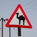 Achtung Kamele :)