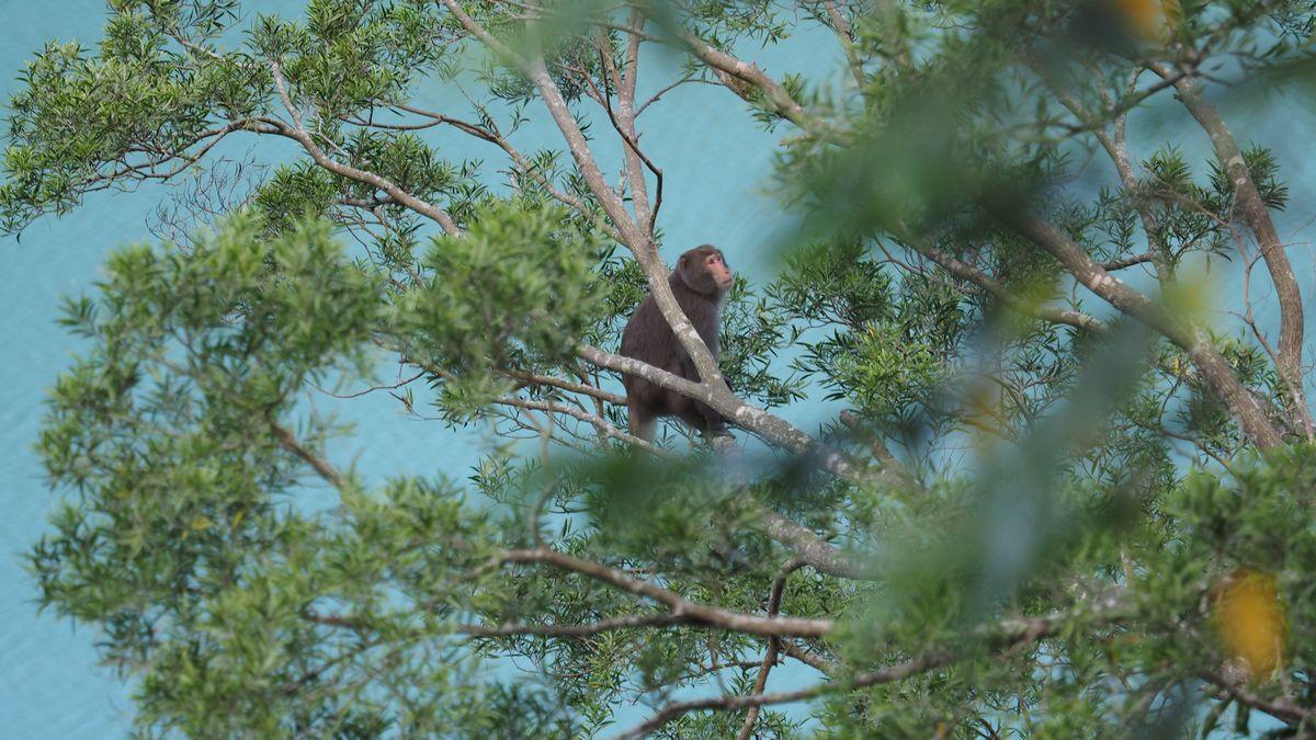 erste Begegnung mit Affen - entlang des Dahan River