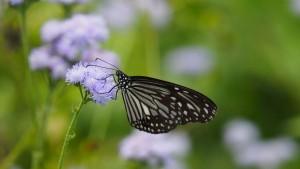 Eldorado für Schmetterlinge