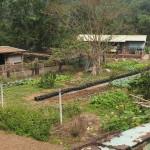 Gemüse wird eifrig angebaut