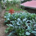 Gemüseanbau am Shitoushan/Lion's Head Mountain