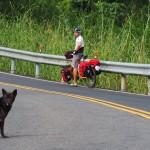 typischer Straßenhund - sehr scheu