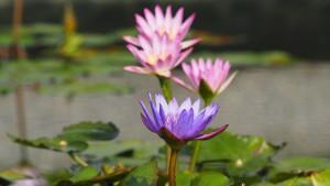 im Garten des Xuanzang Temples