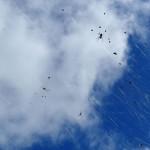 immer wieder: riesen Spinnennetze entlang der Straße