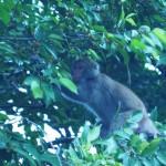 neben uns frühstücken auch ein paar Affen
