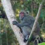 Affen links und rechts der Straße - wir würden sie am liebsten stundenlang einfach nur beobachten