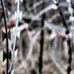 trauriges Motiv: frischer Grenzzaun Kroatien/Slowenien