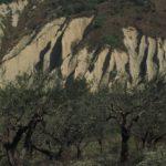 Olivenhain bei Chieti